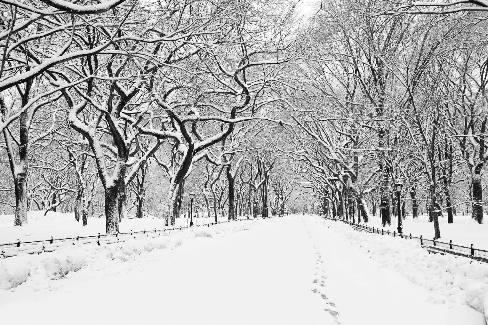Winter, Central Park, NYC